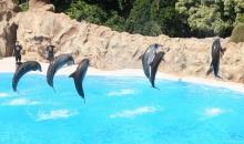 loroparque_dolphinshow