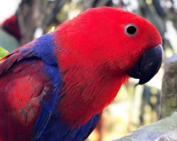 австралийский попугай лоро парк
